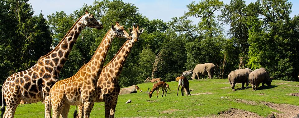 Tierpark Emmen